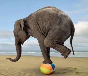 elephant-balance1
